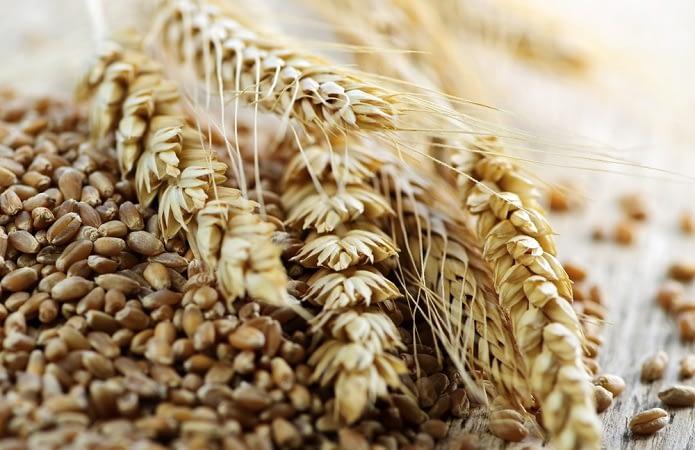 231a6db-wheat5.jpg