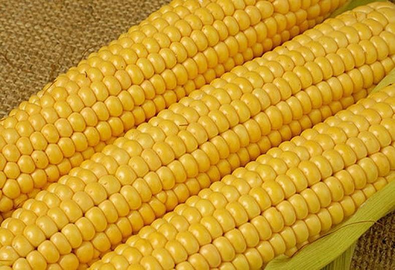 frozen_yellow_sweet_corn_kernel_noodle_flour_meal-4372-21281.jpg