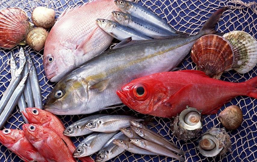 picture2_skolko-ryby-vylov_339488_p0.jpg