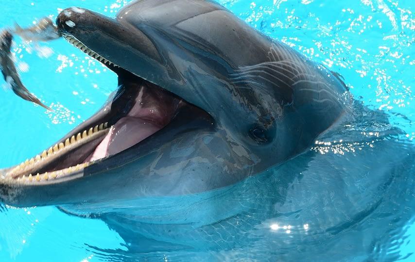 dolphins-1939083_1920-1920x960-1.jpg