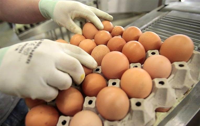 eggs_izrael765.jpg
