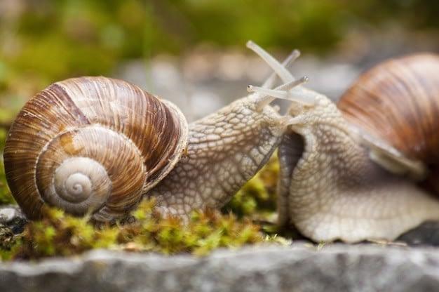 helix-grass-macro-animal-nature-snail-pomatia_121-71446.jpg
